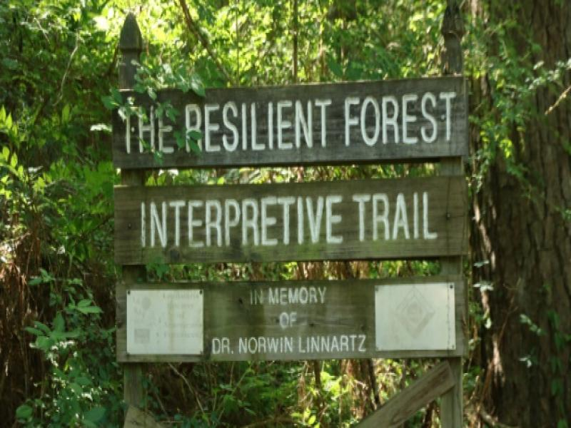 Resilient Forest Trail Southern Forest Heritage Museum
